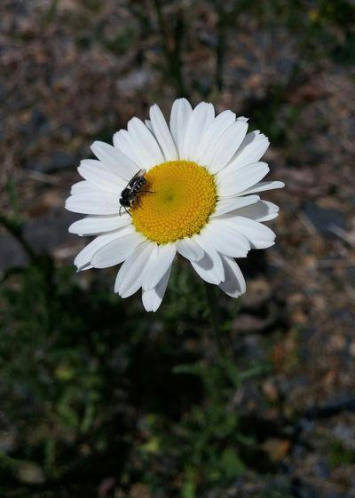 Flowers, Nature And Beauty Bugslife EyeEm Nature Lover Enjoying The Sun Taking Photos Original Unedited.