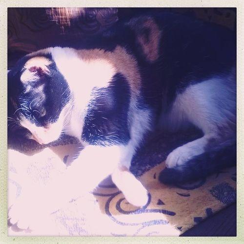 Sundaymorning Cats Family Home Sunlight Lounge Hipstamatic Oggl Helgaviking Ina 's1982