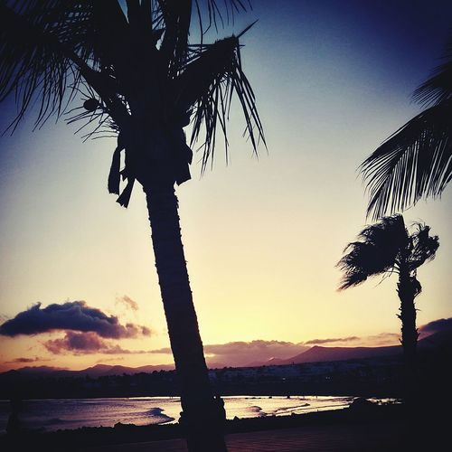 Shady S Sunsetunset. Tree Water Sea Sky Beauty In Nature Nature Dramatic Sky Outdoors Sun No People Beach Day Spainphotographer Beauty In Nature Palm Tree Nature