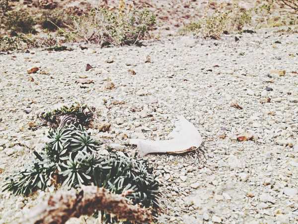 Nature EyeEm Nature Lover Death Structures