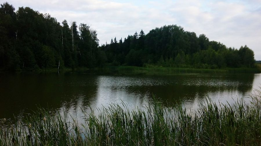 Calm lake against trees in forest