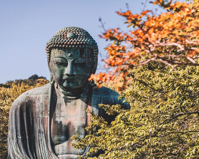 Buddha statue by trees