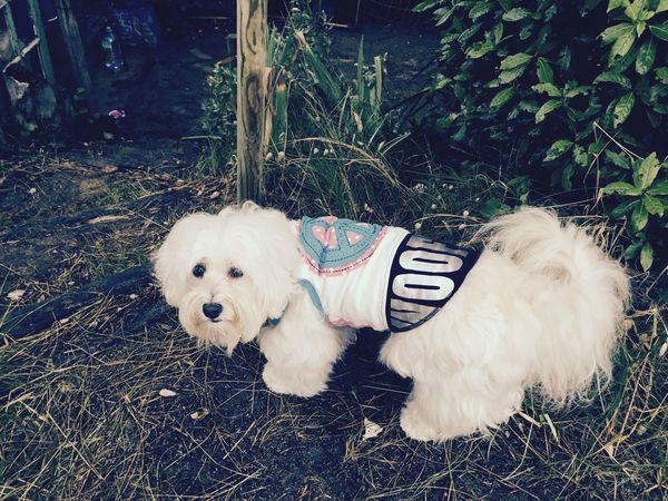 Ile D'Oleron Peace ✌ Myprincess🐶🐶 Isis😍 Ilovemydog Holidays ☀