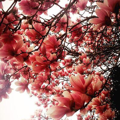 Prettyflowers Itsfinallywarmout