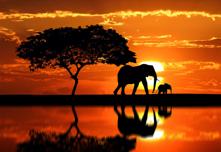 Reflection of silhouette elephant with calf on lake at sunset