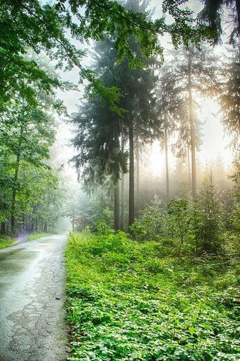 Taking Photos Walking Around Nature Forest