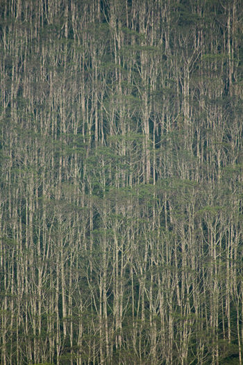 High angle view of grass growing in forest