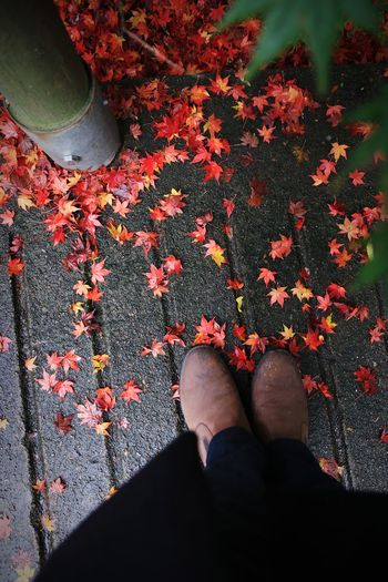 Low section of person standing by fallen maple leaves on footpath during autumn
