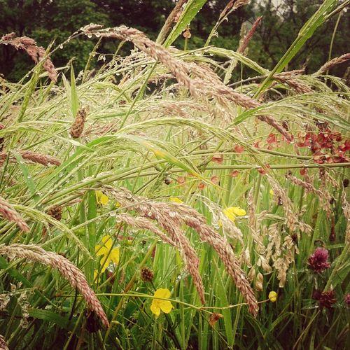 Flowers Raindrops Nature