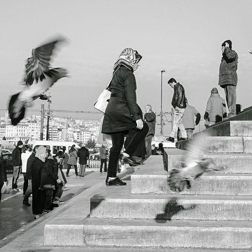 We Are Family Istanbul Birds Headscarf Religion Islamic Islam
