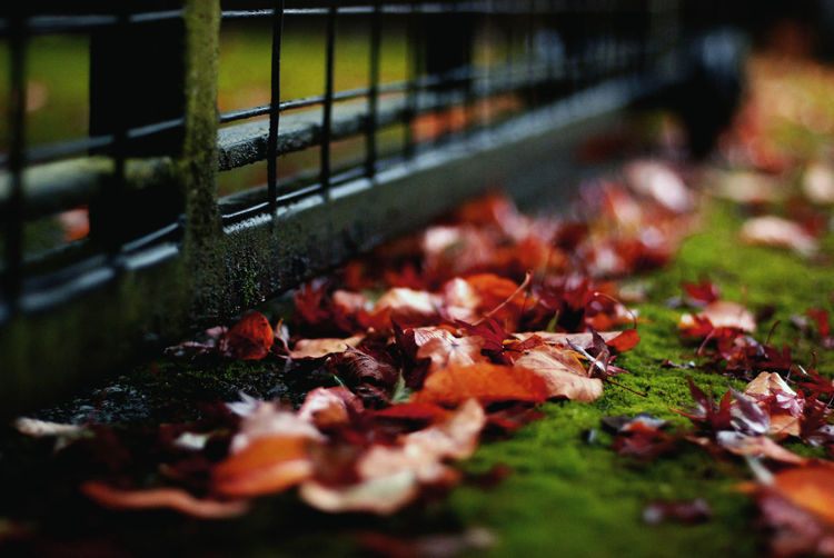 Close-up of autumn leaves by fence on field
