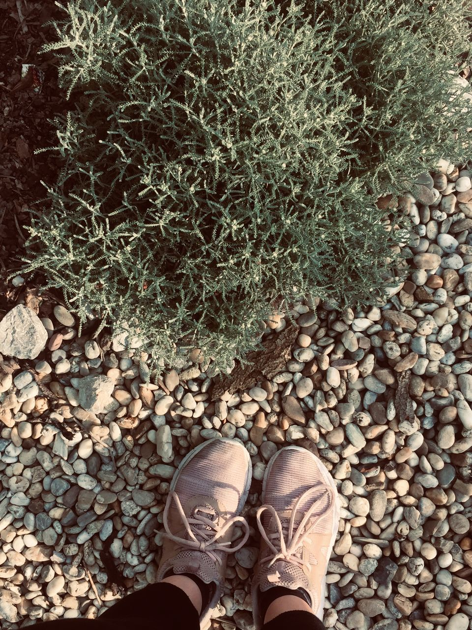 low section, human leg, shoe, human body part, one person, body part, standing, solid, real people, stone - object, day, lifestyles, nature, rock, personal perspective, high angle view, plant, human foot, directly above, outdoors, gravel, pebble, human limb
