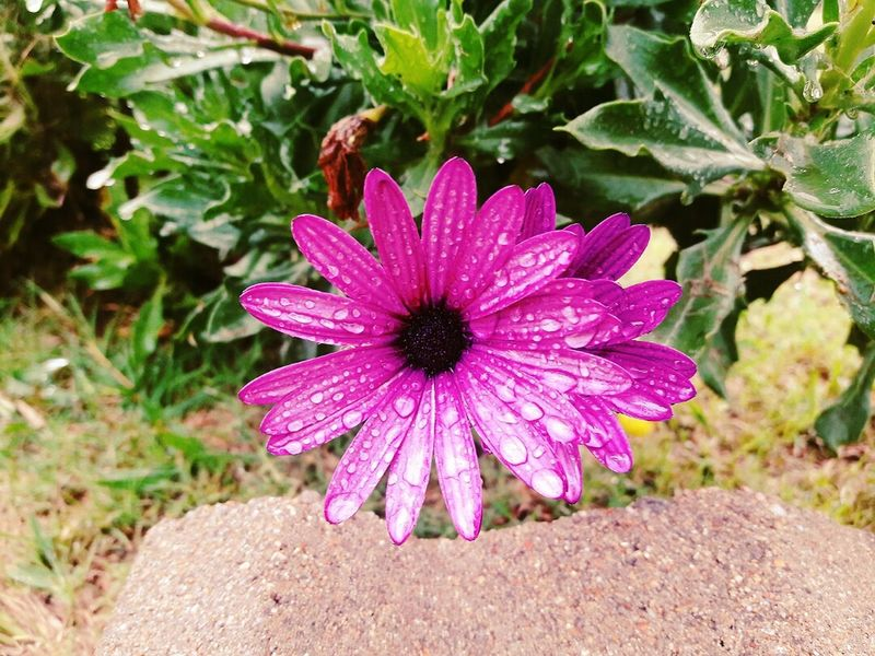 Flower Plant Nature Fragility Purple Day Outdoors Beauty In Nature Petal Flower Head