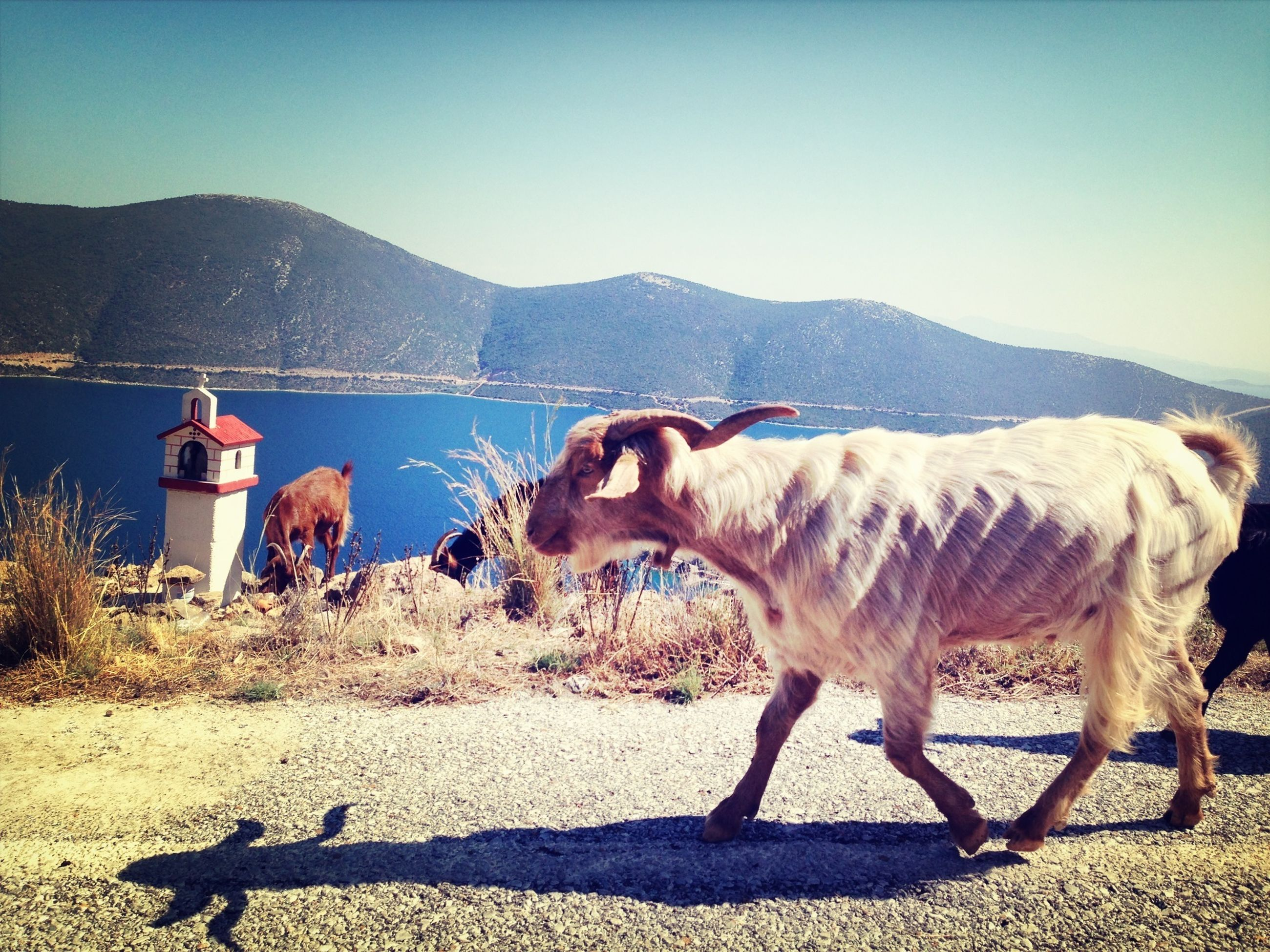 animal themes, domestic animals, mammal, clear sky, mountain, one animal, livestock, copy space, water, horse, side view, standing, nature, sand, mountain range, two animals, beach, herbivorous, sky, full length