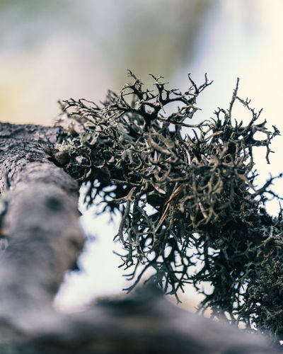 Close-up of fallen tree with moss