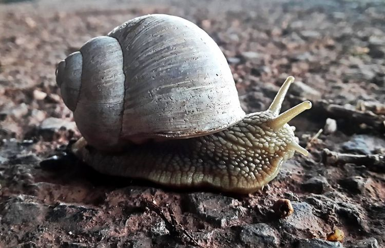 Snail Schnecke Gary Animal