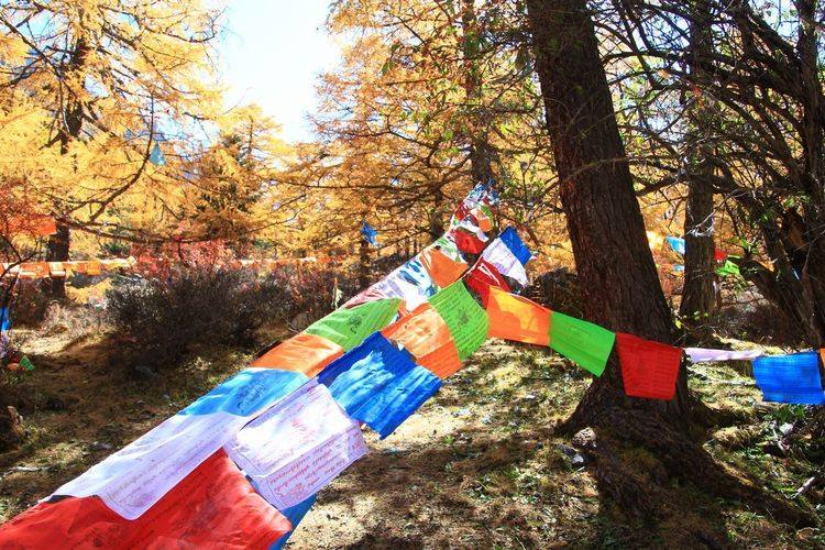 believe in Flag Forest Belief Colorful Wildlife Pine Tree Light And Shadow Plant Part Scene Scenics - Nature Scenery Dramatic Famous Background Wonder Country Life Folk Outdoors Exterior Asian  Lifestyles Dusk Intensive Hill Rural Scene Tree Multi Colored Sunlight Sky Grass