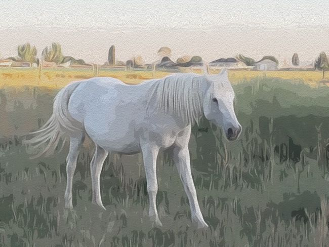 Animal Themes One Animal Side View No People Outdoors Horse Digital Art Digital Painting Mammal White Horse