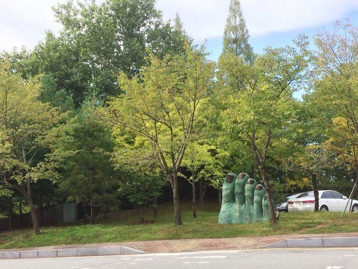 Still Life No People IPhone 5S Street Road Tree Green Color Gwangju Chosun University IT University