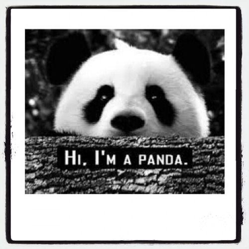 Amo i panda ?? First Eyeem Photo