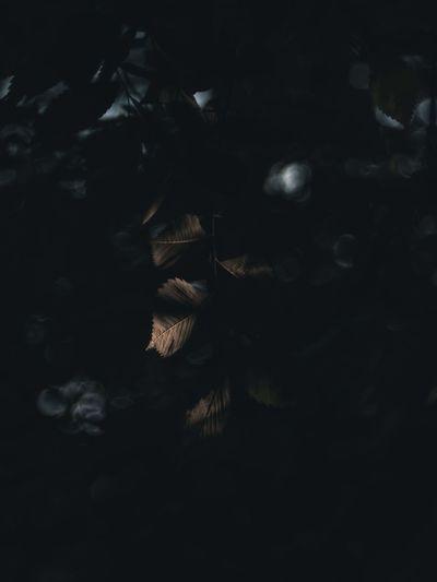 Full frame shot of dry leaves