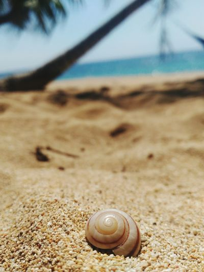 Sand Beach No People Nature Outdoors Close-up Closeupshot Closeup Photography Close‐up Photography Summer Vacations Multi Colored Beachphotography Beach Photography Cabongaoanbeach Cabongaoan Pangasinan Summerinphilippines Summerinseptember Vacation2017 Asuszenfone2photography