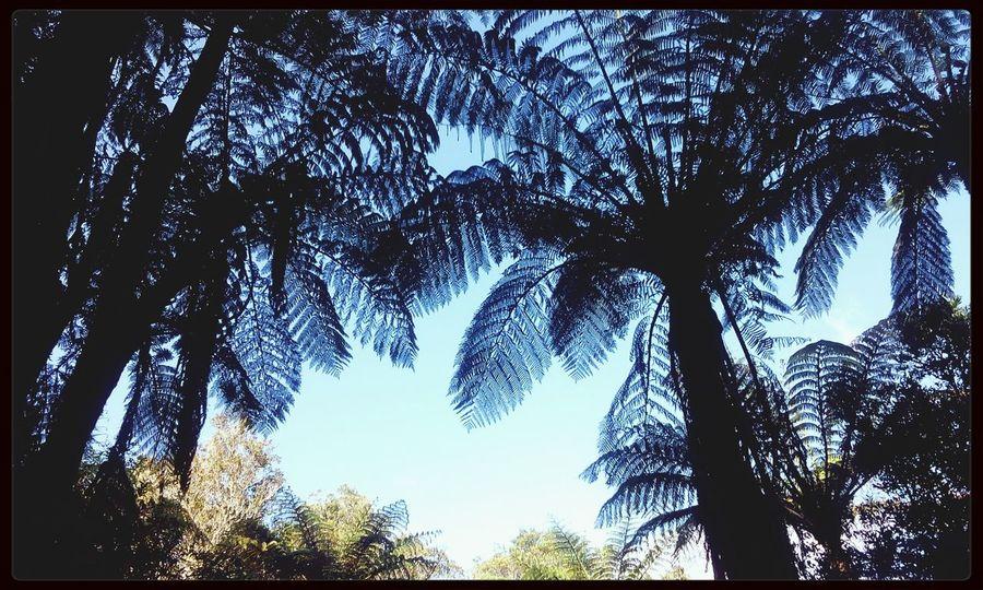 Fernx Hugging Trees Nature IrenesPics