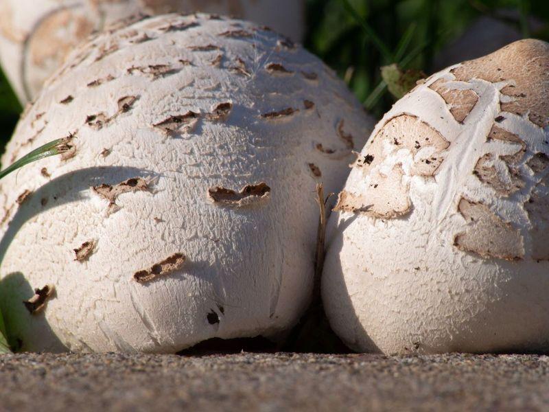 mushrooms Mushroom Nature Fungi EyeEm Selects Close-up