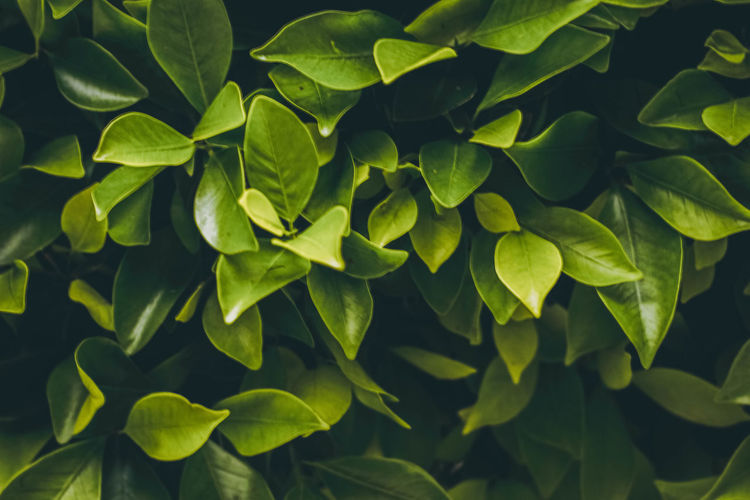Hojas de árbol. Backgrounds Beauty In Nature Close-up Day Flower Fragility Freshness Full Frame Green Color Growth High Angle View Leaf Leaves Nature No People Outdoors Plant Plant Part Texture Tranquility Vulnerability