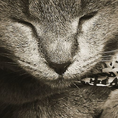 Check This Out Greycat Black And White Close-up My Fur Baby Cats Of EyeEm