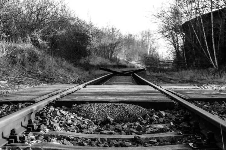 Leipzig Bahnbetriebswerk Day Growth Lost Places In Leipzig Lostplaces Nature No People Outdoors Plant Rail Transportation Railroad Tie Railroad Track Railway Track Train - Vehicle Transportation Tree
