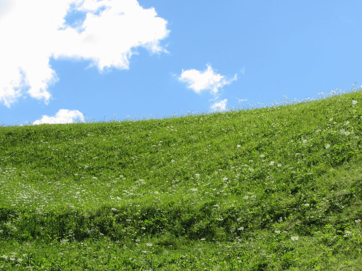 Grassy field at the rolling hill against the blue sky Background Countryside Day Ecology Field Foliage Forest Grass Grassland Green Growth Hill Leaf Lush Meadow Nobody Panoramic Pasture Plant Scenery Sky Space Summer Wildflower Woods