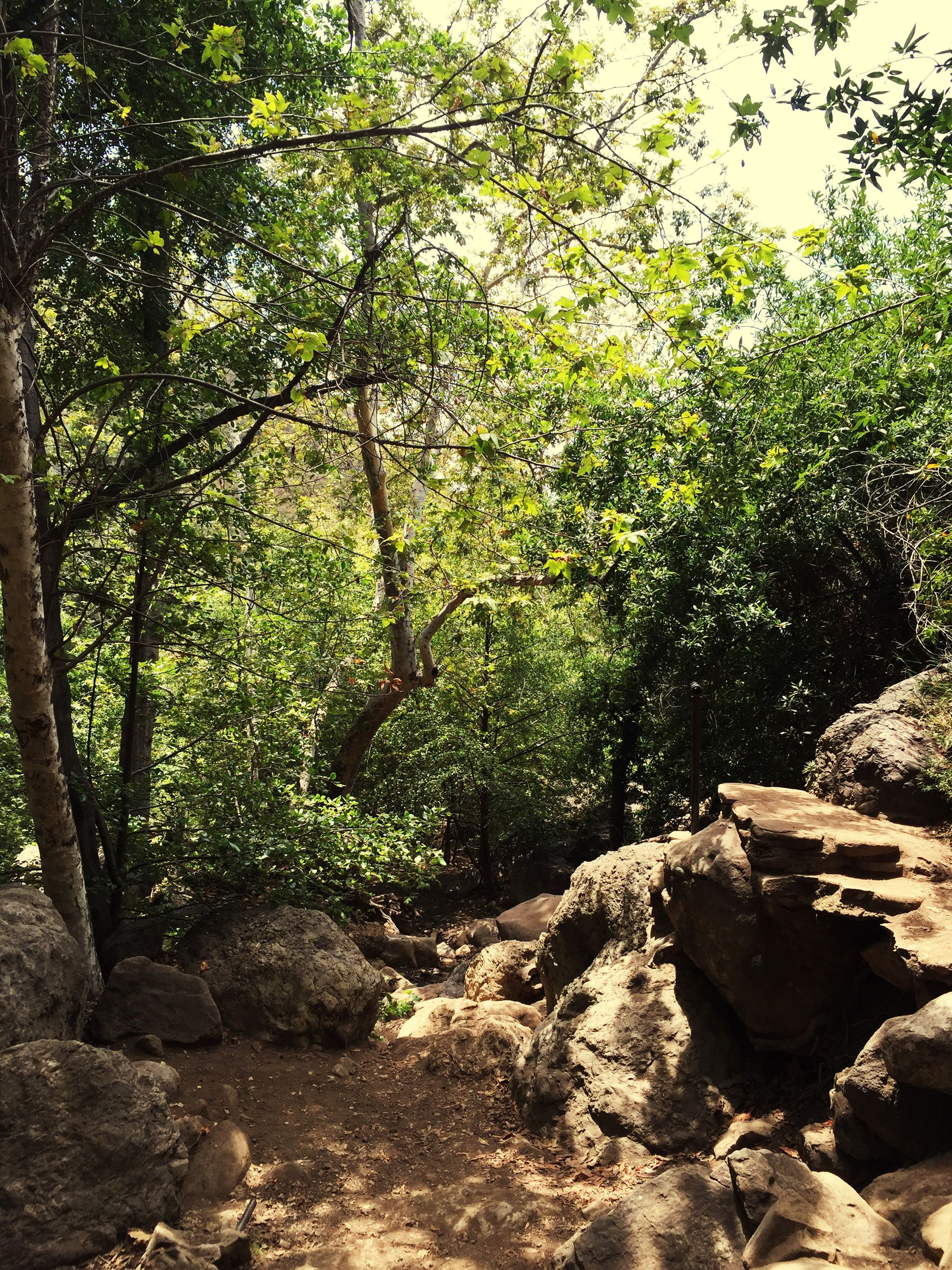 tree, tranquility, forest, nature, tranquil scene, growth, rock - object, beauty in nature, scenics, green color, non-urban scene, tree trunk, landscape, day, branch, outdoors, non urban scene, sunlight, rock, no people