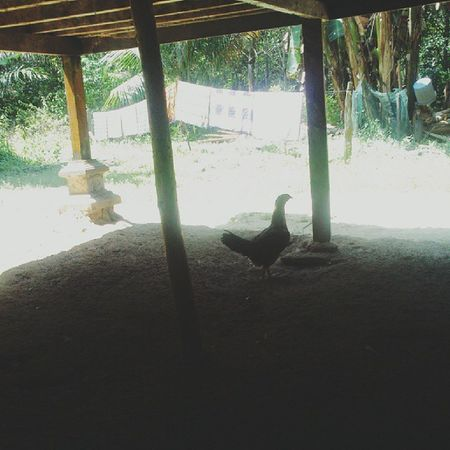 Chicken run Vscocam Android Tester