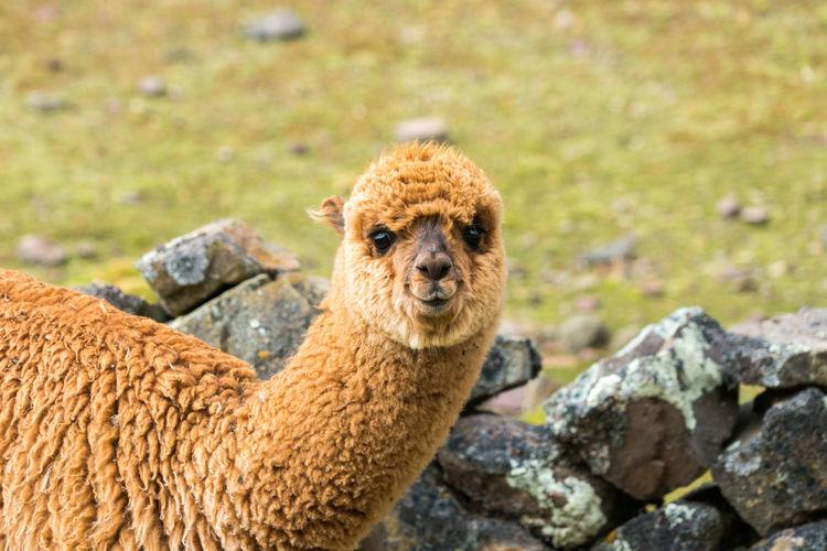 Portrait of an animal on rock