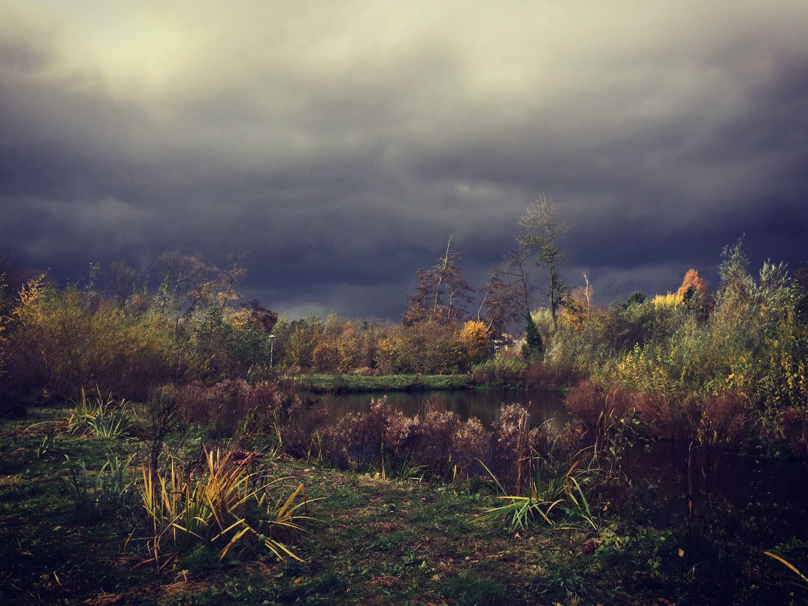 growth, sky, nature, plant, flower, cloud - sky, tree, beauty in nature, no people, outdoors, field, day, fragility, storm cloud, water, architecture, freshness