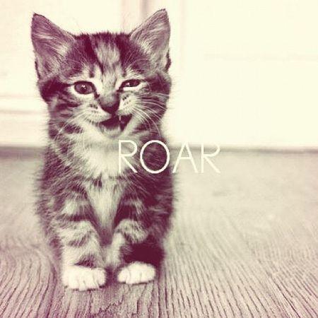 Love Cat Roah Miaou babydoudou