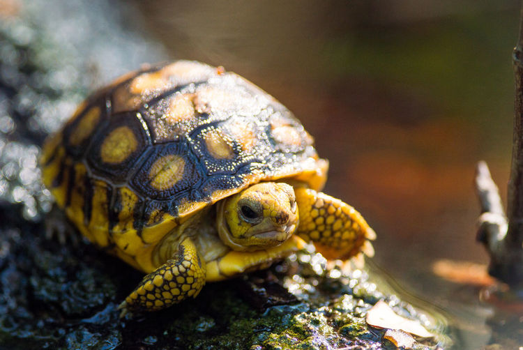 Close-Up Of Turtle In The Wild