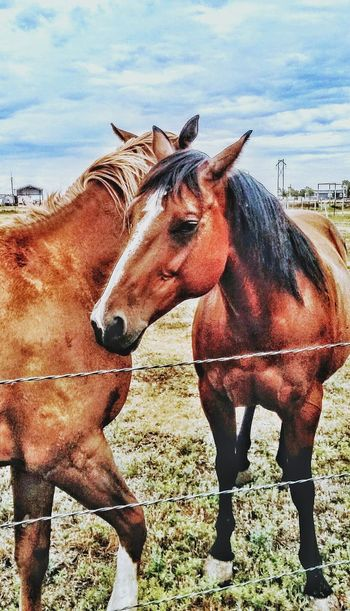 Ranch Horses Horse Mammal Domestic Animals Animal Themes Day Outdoors Sky Equine Pasture Western Amarillo, TX Country Cowboy Livestock Agriculture Pony Stable Paddock Corral Mane Working Animal Cattle Ranch Ranch Lifestyle Barn The Week On EyeEm
