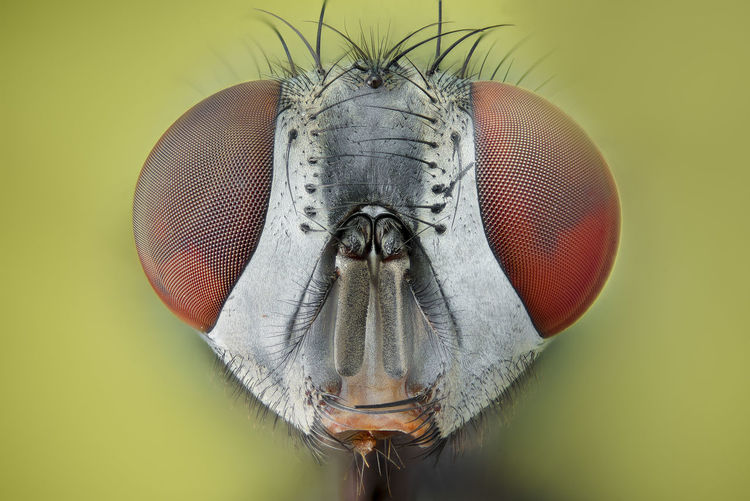 Market Animal Animal Body Part Animal Eye Animal Head  Animal Themes Animal Wildlife Animal Wing Animals In The Wild Close-up Colored Background Extreme Close-up Eye Fly Insect Invertebrate Macro No People One Animal Zoology