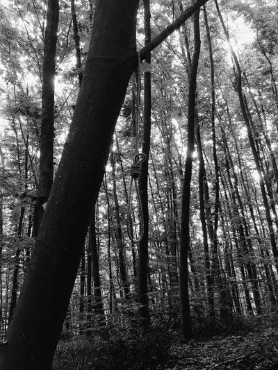 Suicide forest ? Selfdestruction