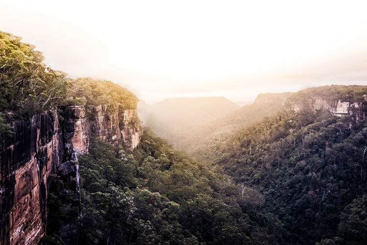 The stunning Fitzroy Falls, Morton National Park, New South Wales, Australia View Landscape Landscape_photography Rocks Cliff Desaturated Clean White Sky Newsouthwales Travel Travelaustralia Trees Bush Forest Nationalpark Australia White Background Cinematic EyeEmNewHere The Great Outdoors - 2017 EyeEm Awards