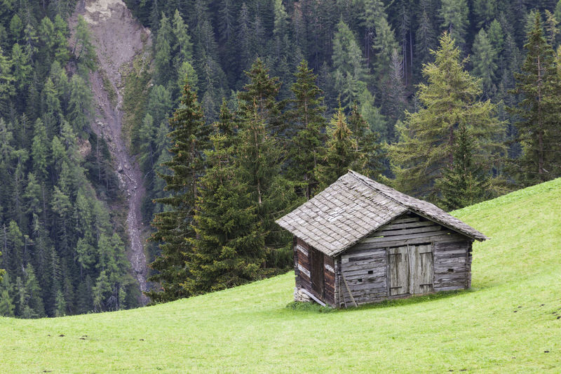 View of hut in forest