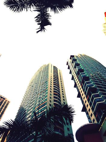 Tree Building Eastwood