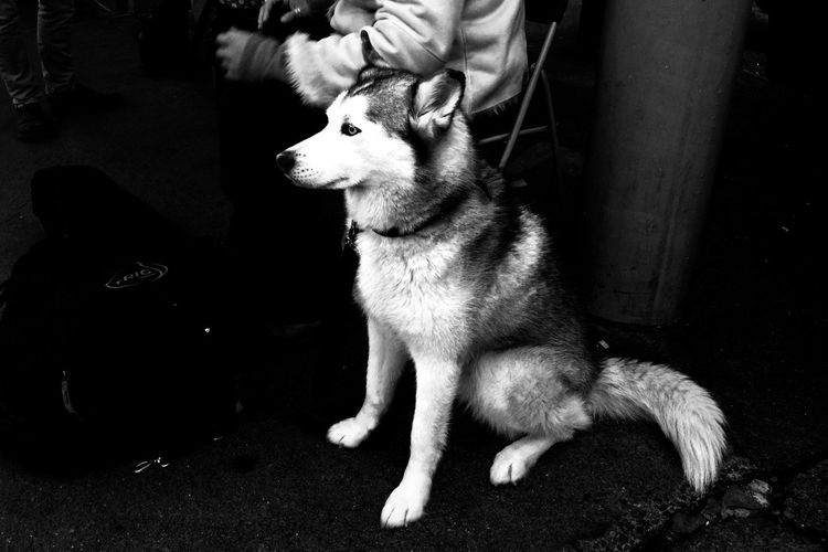 Luna Black And White Seattle Pike Place Market