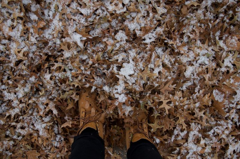 Low section of person wearing shoes while standing amidst fallen leaves covered with snow