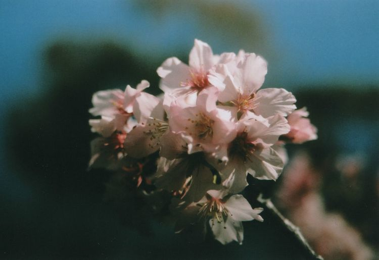 Close-Up Of Flowers Blooming On Tree