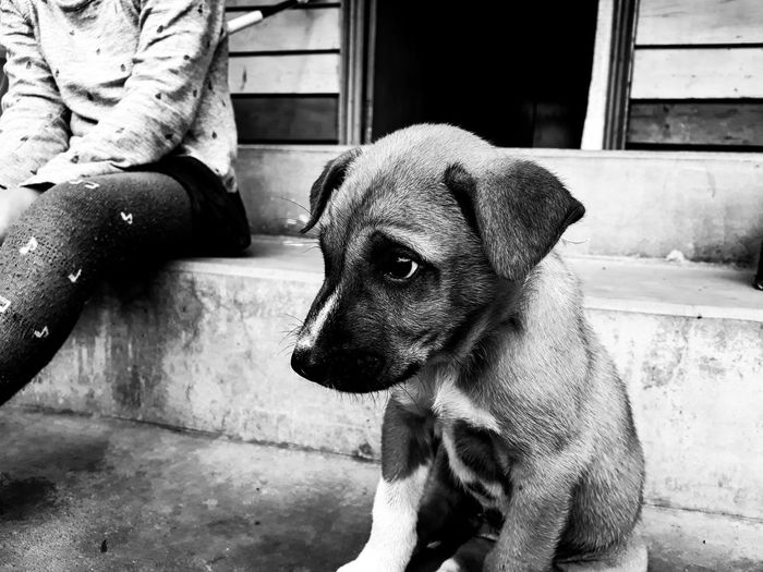Puppy Young