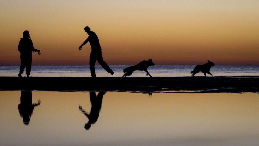 Silhouette people with dogs standing at beach against sky during sunset