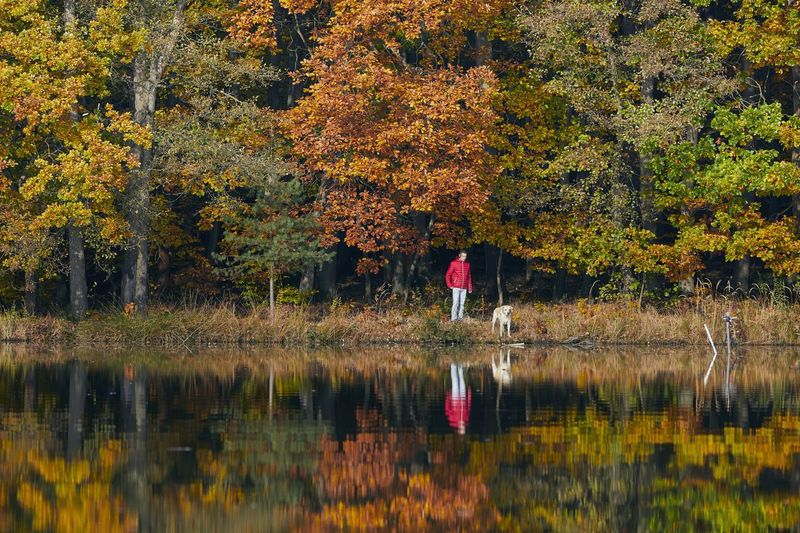 Rear view of man standing by lake during autumn